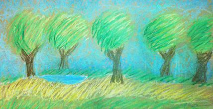 Pheobe trees72